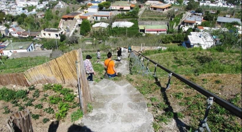 Stop all 39 attivit di ristorazione per il giardino - Giardino mediterraneo ...