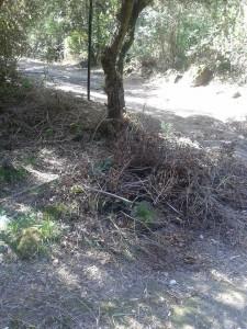 pineta degli atleti, rovi e erbacce lasciate sui sentieri principali