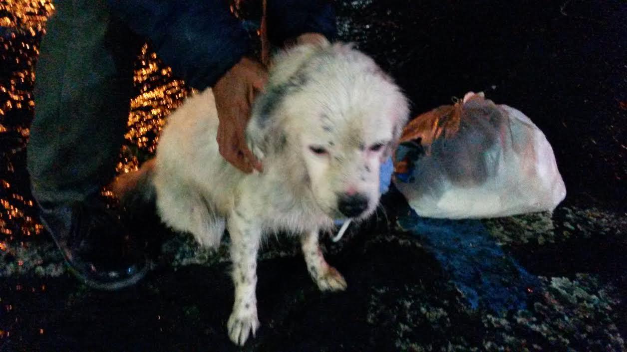Photo of Salvato un cane in mare a Marina Grande