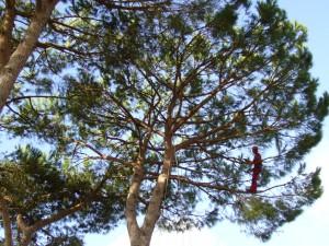 Ischia, alberi a rischio crollo - ilgolfo24