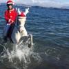 """<span class=""""entry-title-primary"""">A Christmas horse, Babbo Natale arriva al maneggio</span> <span class=""""entry-subtitle"""">L'iniziativa di Aragona Arabians, davvero originale e mai vista prima sull'isola</span>"""