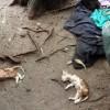 """<span class=""""entry-title-primary"""">Ischia, nuova strage di gatti randagi</span> <span class=""""entry-subtitle"""">Trovati morti in pinea, il sospetto è che qualcuno possa averli avvelenati: quattro felini senza vita avevano appena poche settimane</span>"""