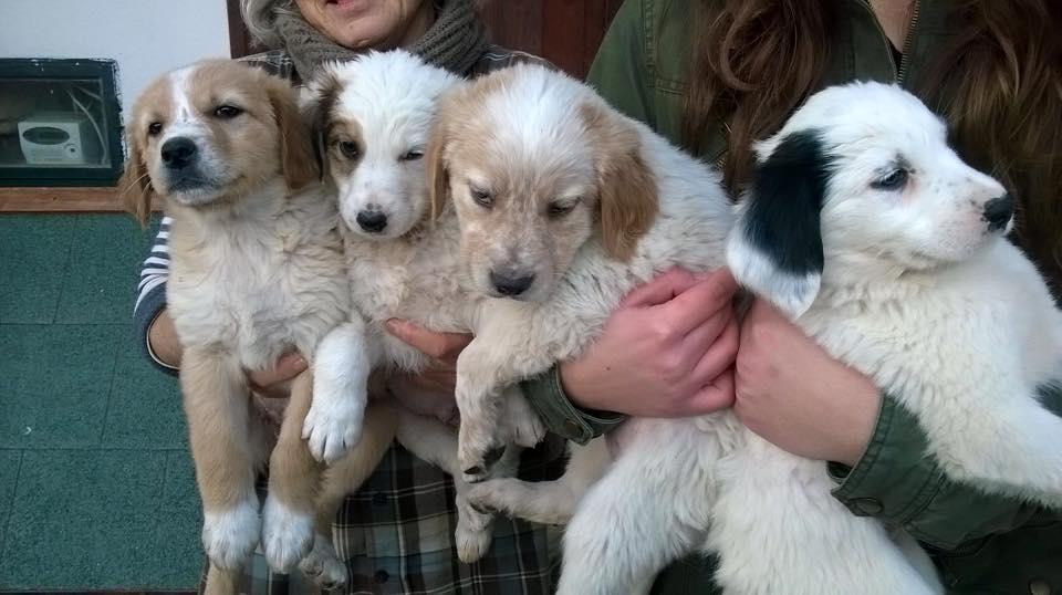 Photo of Cani, fioccano gli abbandoni: e le volontarie si sfogano