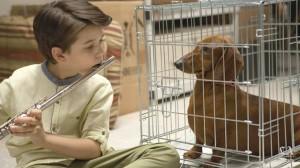 Wiener dog (per box)