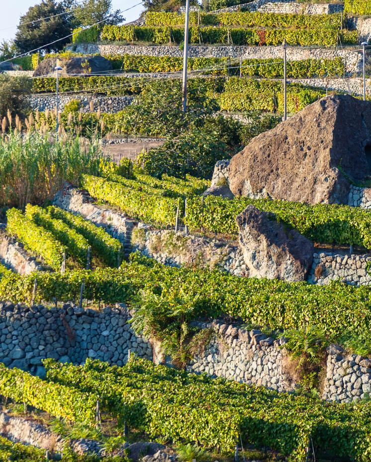 Gianluca castagna ischia u dai giardini arimei alla tenuta - Giardini terrazzati immagini ...