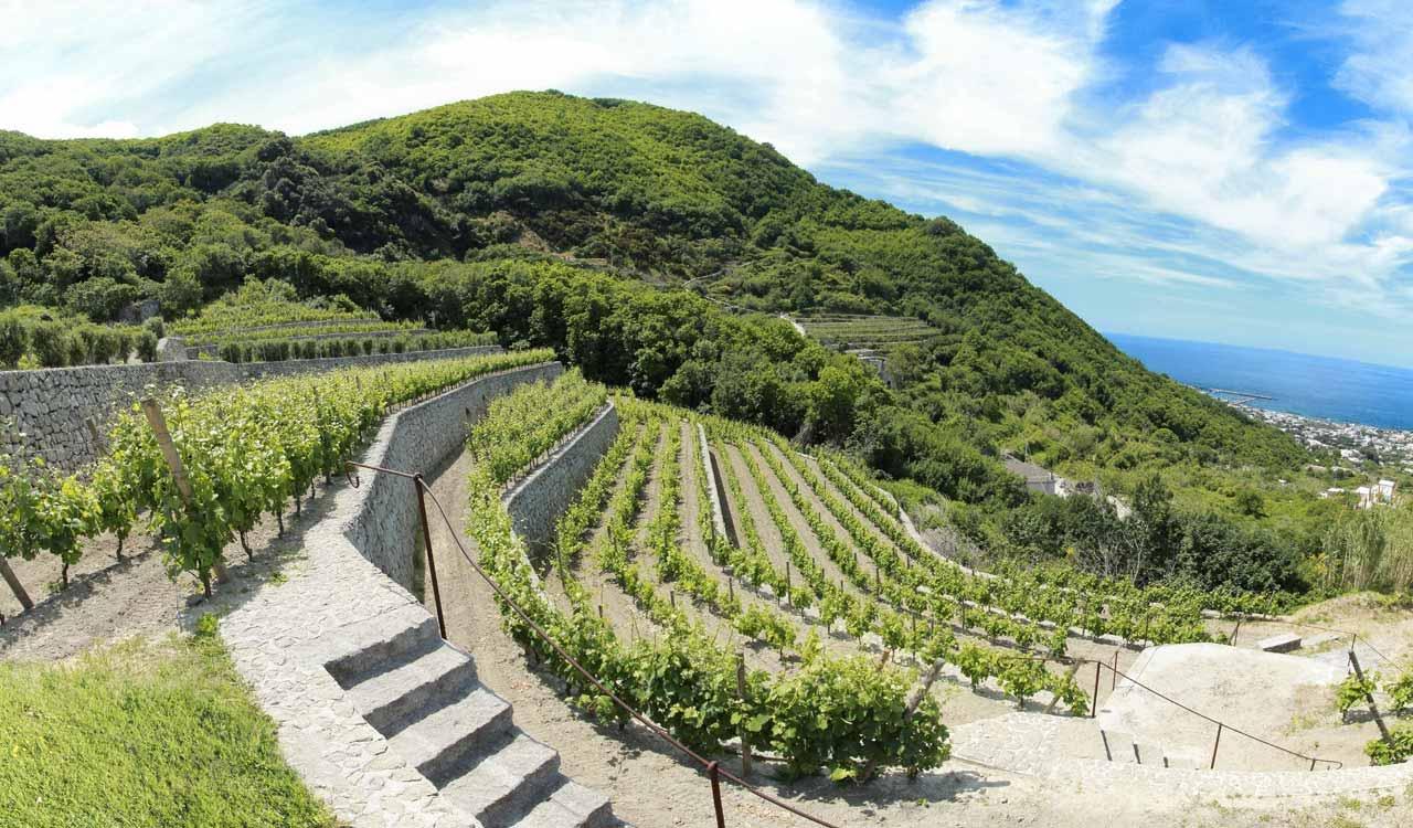 Photo of Al via da oggi il 3° Convegno mondiale sui paesaggi terrazzati, a Ischia le scelte per il futuro