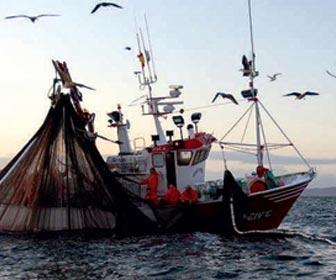 Photo of Pesca, arrivano i finanziamenti per Ischia e Procida