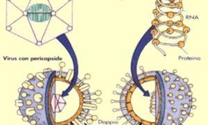 """<span class=""""entry-title-primary"""">Perché alcuni considerano i virus come """"esseri non viventi""""</span> <span class=""""entry-subtitle"""">L'ANGOLO DEL NATURALISTA – a cura del dottor Mattia De Vivo*</span>"""