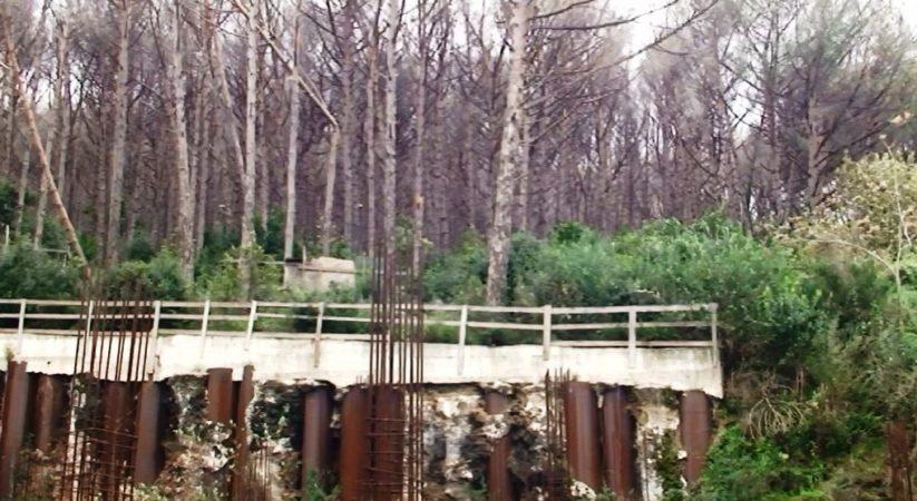 Non lasciamo morire i pini del bosco della Maddalena, l'appello di Savio