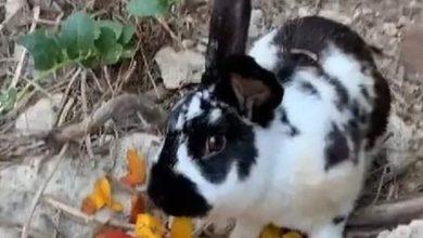 Photo of Coniglio ucciso a sassate, a Lacco la manifestazione in ricordo di Roger