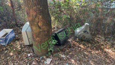 Photo of Cretaio, Verdi scoprono discarica abusiva nel bosco